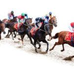 horse-racing-new-zealand