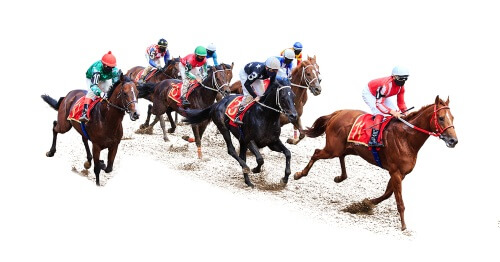 Horse betting systems nzqa bologna napoli betting experts